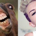 16 cavalli che assomigliano incredibilmente a Miley Cyrus