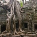 Le foto dei 7 alberi più strani del mondo