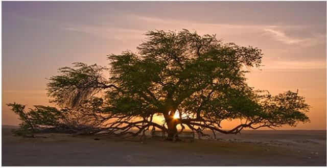 alberi strani immagini