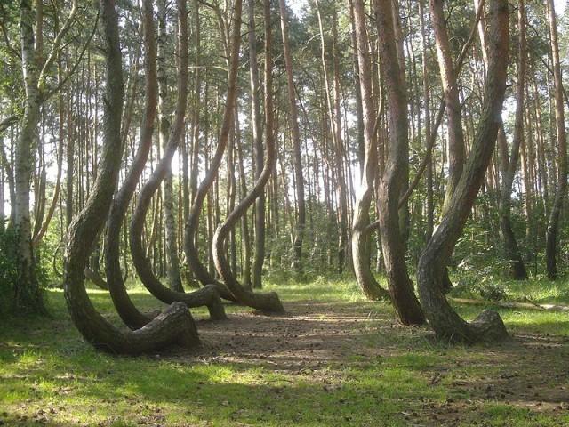 alberi storti