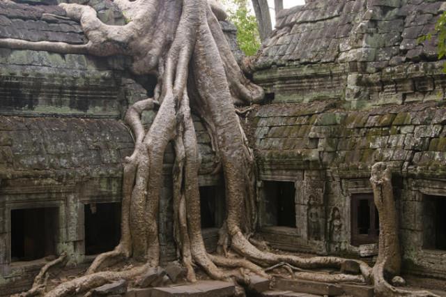 alberi lunghe radici
