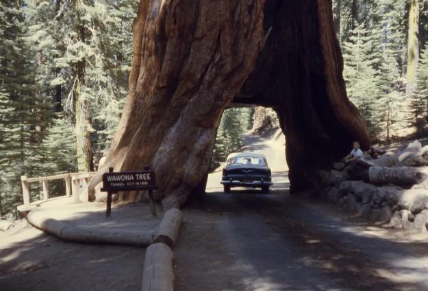 alberi forme strane