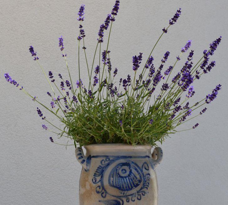 6 piante d'appartamento che possono far profumare ogni stanza della tua casa